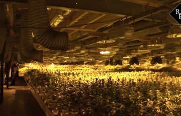 Mega hennepkwekerij met 33.000 planten opgerold Van Voordenpark Zaltbommel