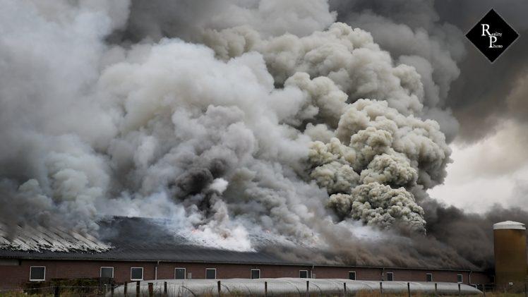 3000 varkens omgekomen bij stalbrand Biezenmortel