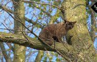 Brandweer en wethouder redden kat uit boom
